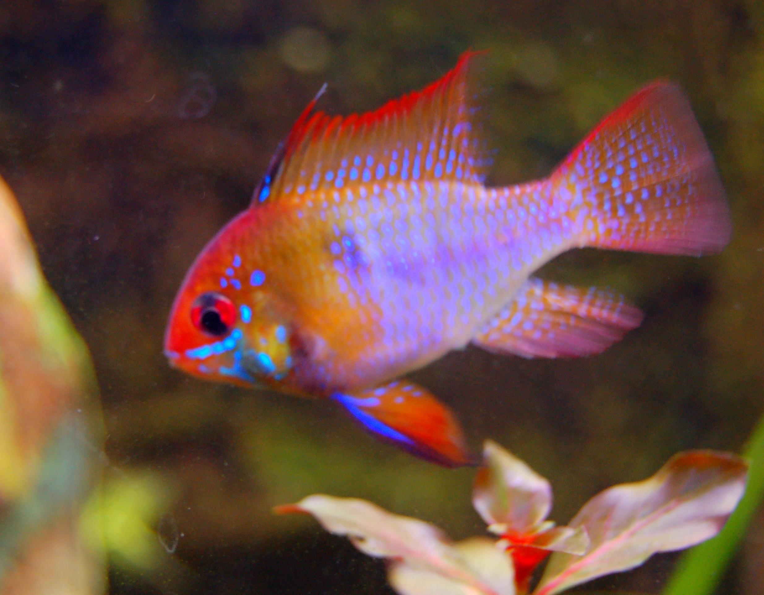 Fische | dandelionia